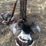 Turkey Hunting New Mexico